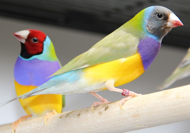 Birds can be perfect pets for our older loved ones